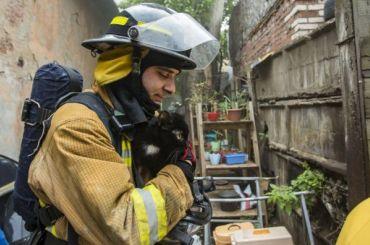 Триста кошек исемь собак спасли изгорящего приюта вПетербурге