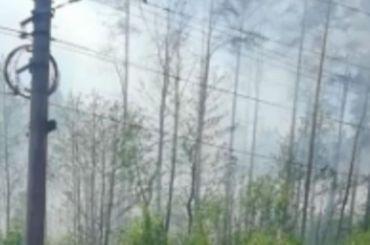 Загорелся лес вКировском районе Ленобласти