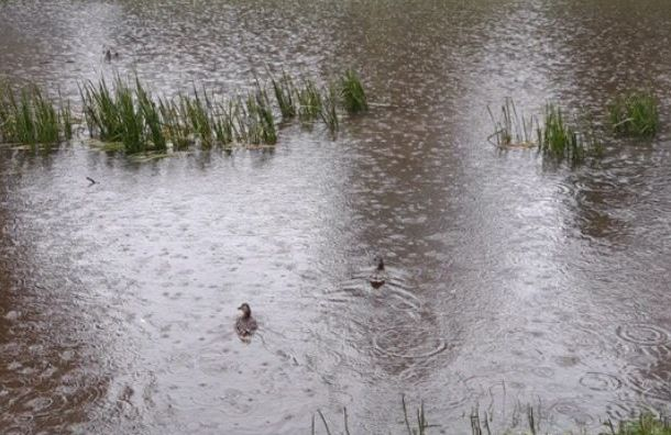 Дождевая вода затопила Куракину дачу