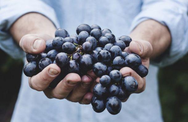 Ограничения поввозу фруктов ицветов введут вРоссии с19августа
