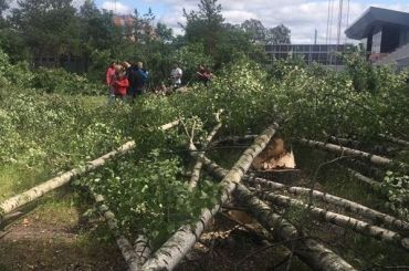 Защитники Муринского парка проведут пикник узабора против вырубки березовой рощи