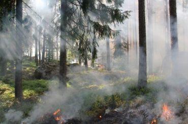Россия может лишиться промыслового леса из-за лесных пожаров