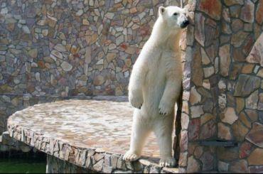 Гости зоопарка скормили медведице мороженое иполучили нагоняй