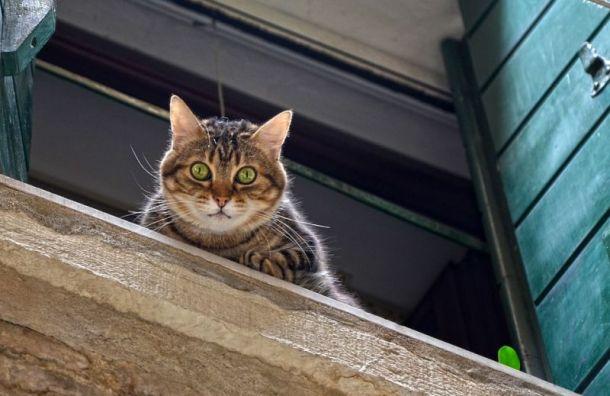 Петербурженка сорвалась скарниза, пытаясь спасти кошку