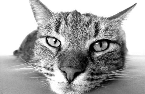 Петербург попал втоп-3 самых добрых городов для беспородных кошек