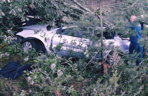 Водитель Mitsubishi погиб после столкновения сдеревом вЛенобласти