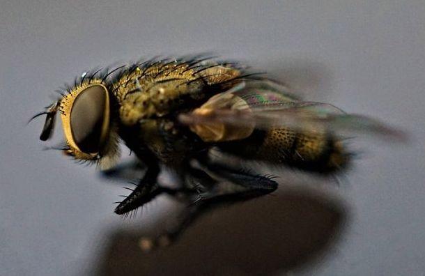 Личинки мух вконтейнере срисом едва непроникли вПетербург изАзии