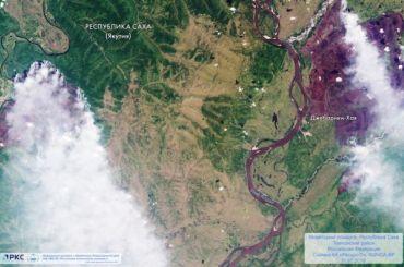 Восстановление сгоревших лесов Сибири может занять более 100 лет