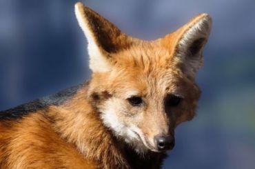 Несколько рейсов вПетербурге ушли навторой круг из-за лисы