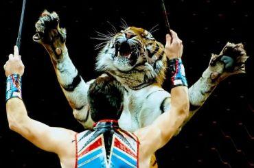 Братья Запашные показали, как кормят тигров вцирке наФонтанке