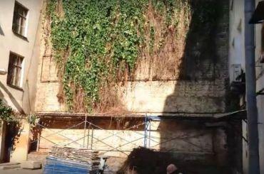 Коммунальщики срубили знаменитую виноградную лозу впереулке Пирогова