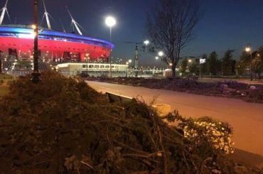 Ночью вырубили аллею голубых елей перед «Газпром Ареной»