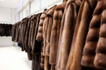 «Бизнесвумен изБолгарии» обманули петербурженку наполмиллиона рублей