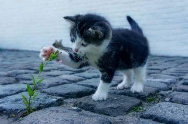 Петербургские спасатели вытащили котенка изканализации