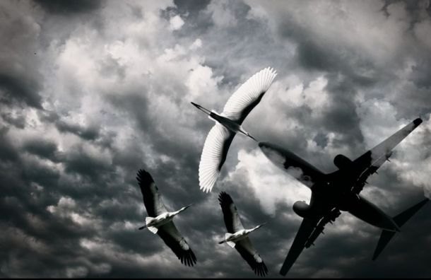 Самолет экстренно сел вЕкатеринбурге после столкновения сптицей