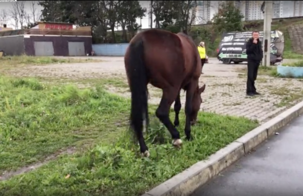 Лошадь несмогла прокатиться натроллейбусе