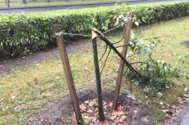 Хулиганы сломали 8 молодых деревьев вКрасном Селе