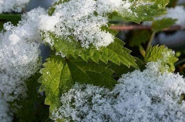 Первый снег вПетербурге выпадет впятницу