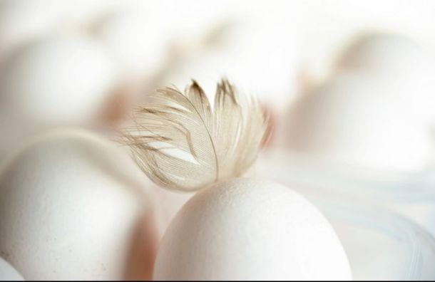 Синявинская птицефабрика будет производить яйца без антибиотиков