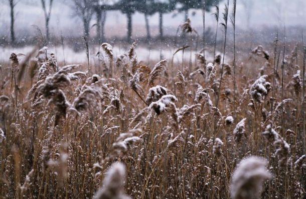 Первый снег может выпасть вПетербурге ввыходные