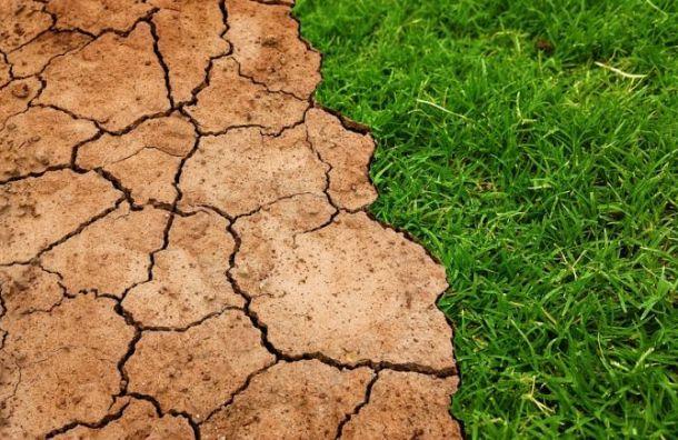Россиянам рассказали оплюсах глобального потепления