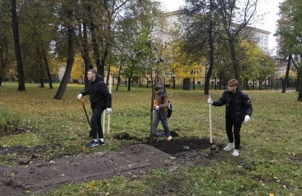 Больше деревьев появилось вПетербурге
