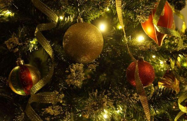 Новогодние ели в Петербурге защитят от вандалов и воров