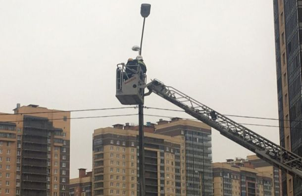 Пожарные сняли ворону состолба наПарнасе