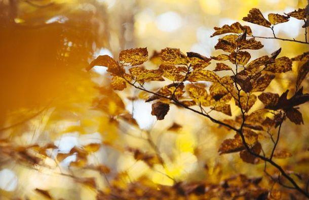 Синоптики обещают квыходным потепление вПетербурге