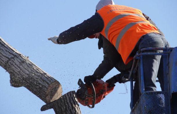 Появился подозреваемый внезаконной вырубке леса на440 тысяч рублей