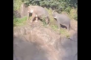 Пять слонов погибли, пытаясь спасти упавшего вводопад слоненка