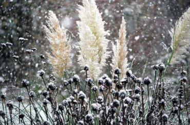 Рабочая неделя вПетербурге начнется смокрого снега игололеда