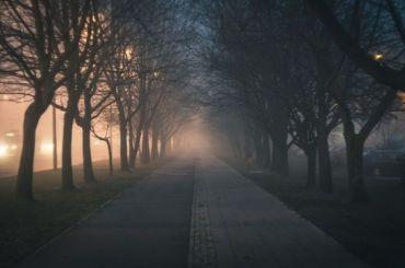 Теплую туманную пятницу пообещали петербуржцам
