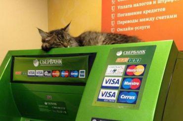 «Сбербанк» нашел виновного вутечке данных