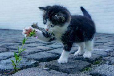 Под окнами квартиры наБелградской нашли братскую кошачью могилу