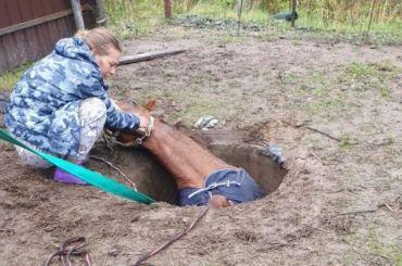 Лошадь провалилась вканализационный люк вНовоселках