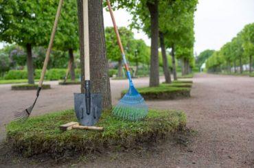 Волонтеры помогут подготовить кзиме парк «Александрия»