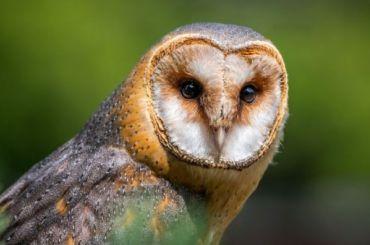 Редкую сову забрали изконтактного зоопарка вПетербурге