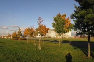 Смольный недавал разрешение навырубку деревьев уСКК