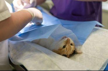 Бездомных кошек стерилизуют забюджетные деньги