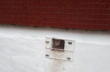 Кошек икотят замуровали водной изшкол Фрунзенского района