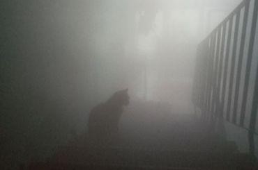 Авария вКолпине лишила жильцов дома горячей воды и«напустила туману»