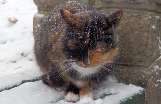 Петербуржцы чаще других россиян берут кошек сулицы