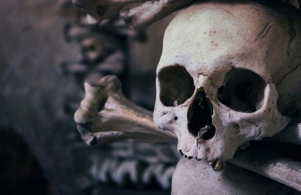Скелетные останки вМойке принадлежали медикам