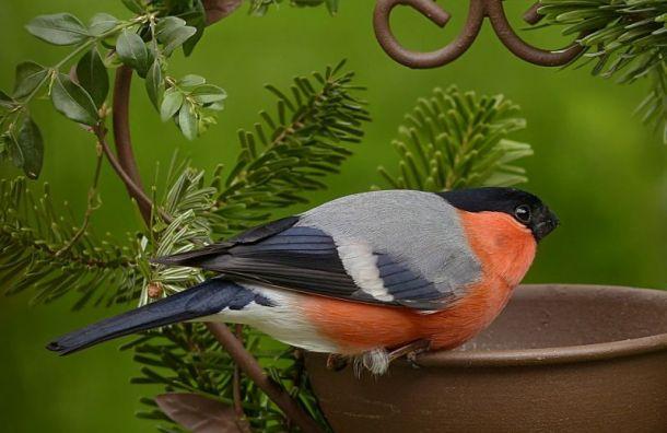 Петербуржцам рассказали, зачем кормить зимующих птиц