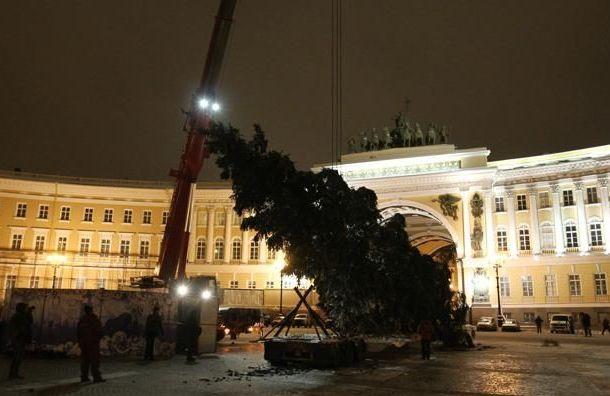 Главную елку наДворцовой установят за4 млн рублей