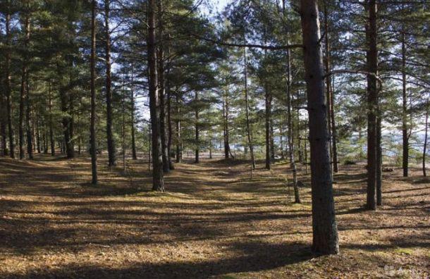 Большой участок леса вСестрорецке хотят продать под дачное строительство