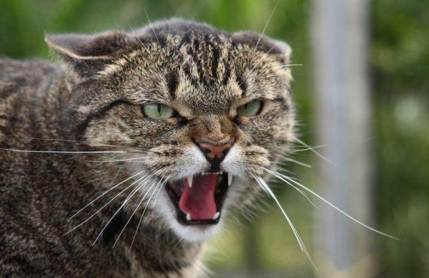 Более 500 бешеных кошек покусали россиян в2018 году
