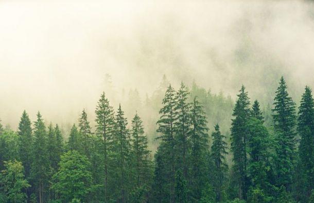 Туман накроет Петербург впонедельник
