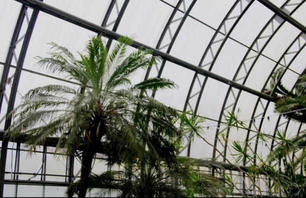 Оранжерее Таврического сада грозит гибель после аварии натрубопроводе